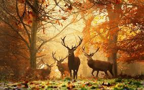 La chasse arrive (du 8 au 31 octobre)